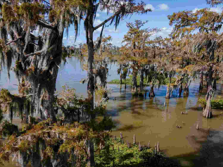 Image of America's largest wetland and swamp, Atchafalaya Basin